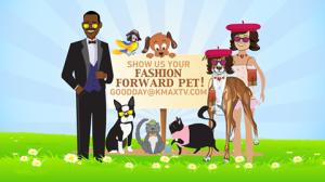 Pet Fashion 1