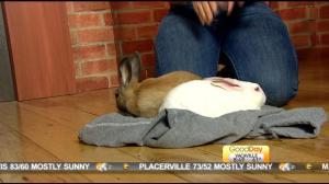 bunnies 1