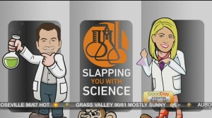 slap with science 1