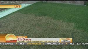 brown lawn 1