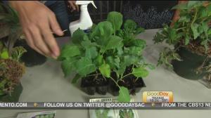 sept 27 plant 4