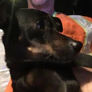 Dog dave found 1