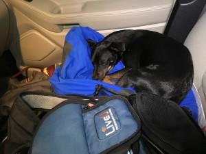 Dog dave found 2