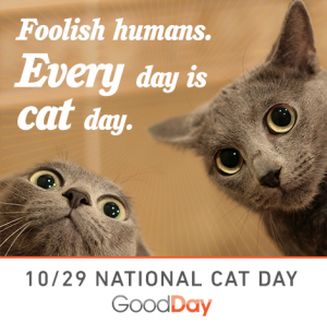 Good day cat day 2