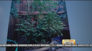 Oct 11 plant 5