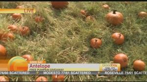 pumpkin giveaway 1
