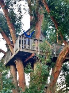 Cambi treehouse 1