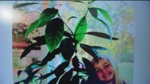nov 8 plant 1
