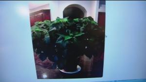nov 8 plant 2