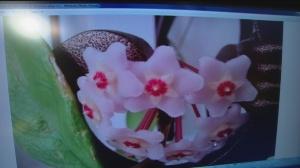 nov 8 plant 3