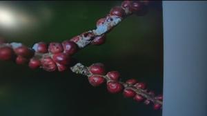 nov 8 plant 4
