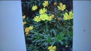 nov 8 plant 5