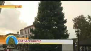 Old sac tree 1