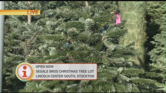Segale trees 1