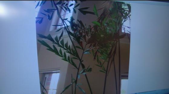 Dec 20 Plant 1