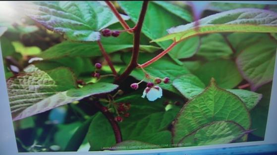 Dec 20 plant 2