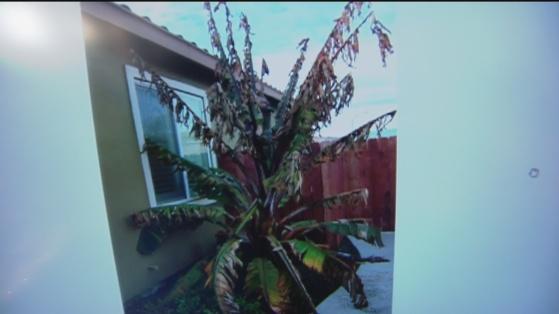Dec 20 Plant 4