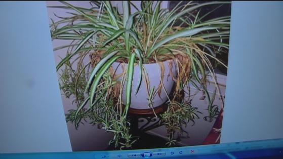 Dec 27 Plant lady 4