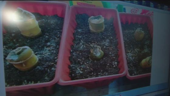Dec 6 plant 2