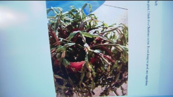 Dec 6 plant 3