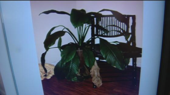 Plant lady 3