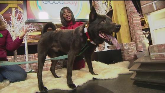 SPCA Caleb 1