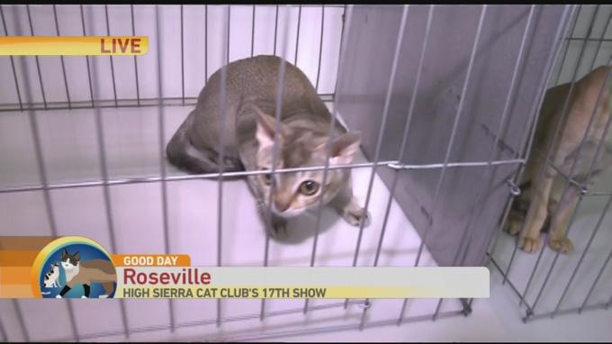 cat show 1