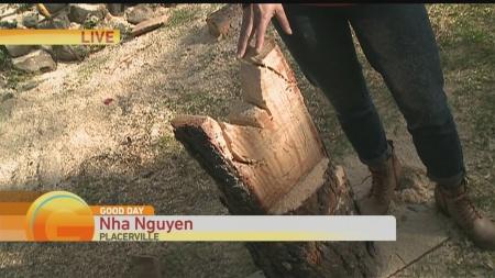 Tree Carver 1