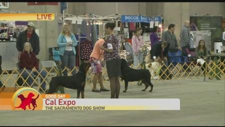 Dog Show 2