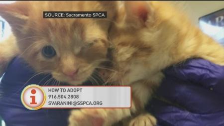 Rescue Kittens 1
