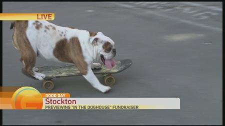 Skateboard dog 1