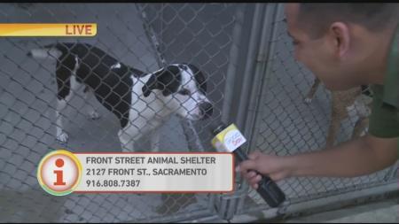 Pet adoption 1