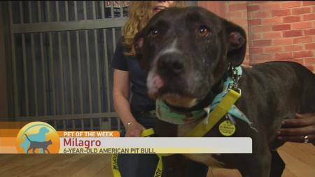 SPCA Milagro 1
