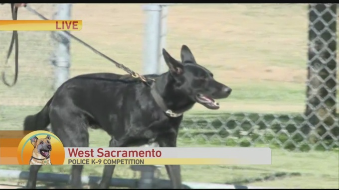 K9 Competition 1