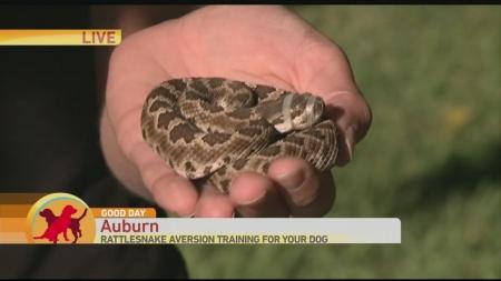 Rattlesnake 1