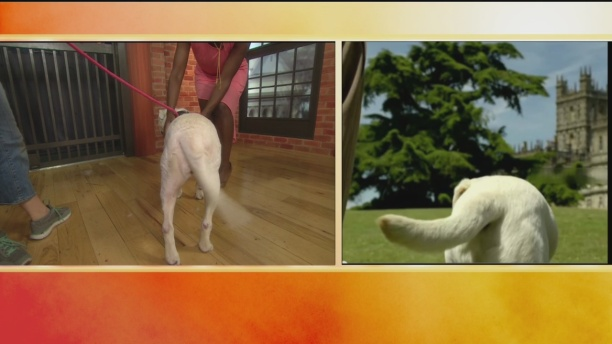 SPCA  Gordie 1