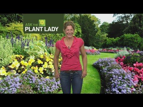Aug 14 Plant Lady 1