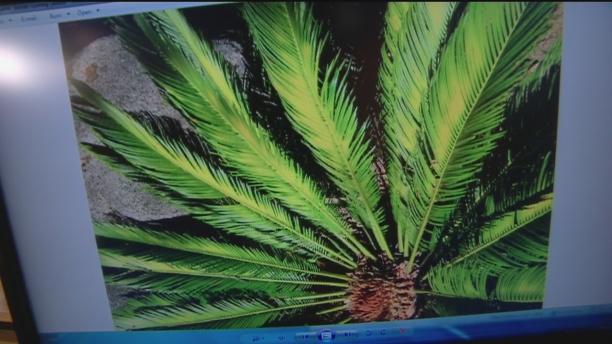 Aug 14 Plant Lady 4