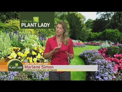 Aug 28 Plant Lady 3