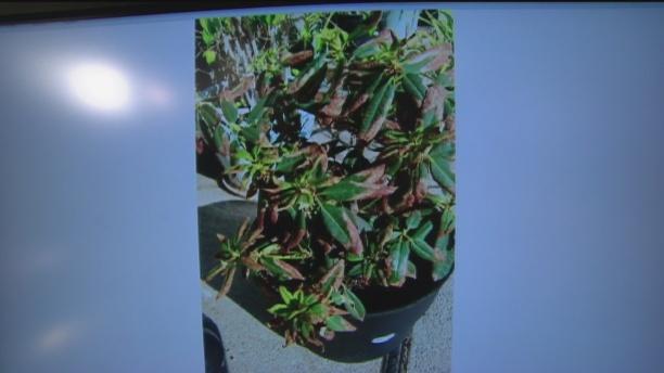 Aug 28 Plant Lady 5