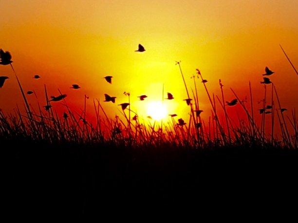 Aug Sunrise Alltrails App 3
