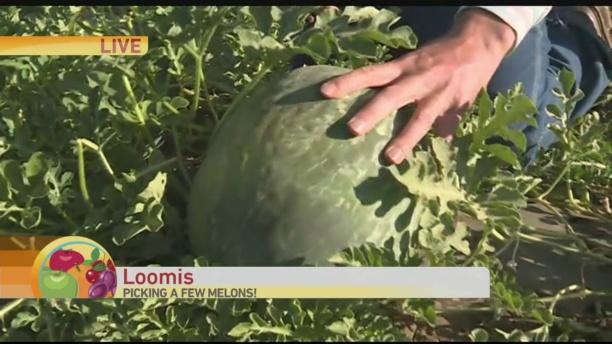 Ballloon Melons 2