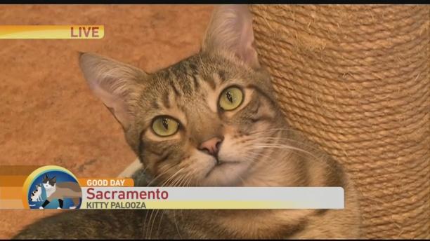 Kitty Palooza 1