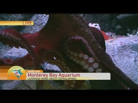 Monteray Bay 1 - Copy