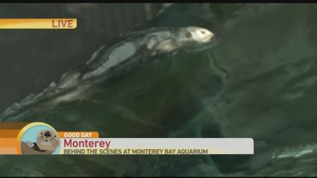 Monteray Bay 3 - Copy