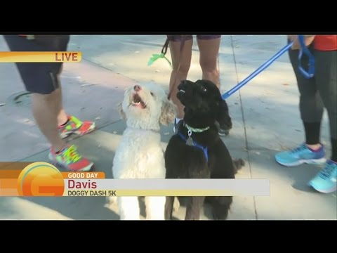 Courtney Davis Doggy Dash 1