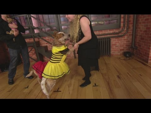 dance-with-dogs-2