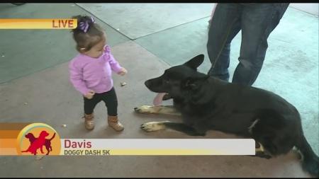 Davis Doggy Dash 1