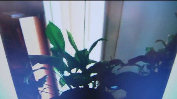 sept-18-plant-4