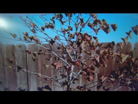 oct-23-plant-lady-4